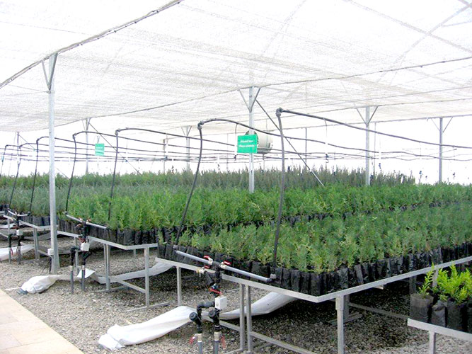 GreenPoint®